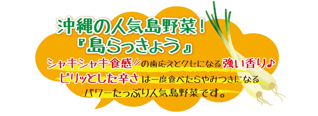 沖縄の人気島野菜島らっきょうの塩漬け。シャキシャキとした食感とクセになる強い香り、ビリッとした辛さ。一度食べたらやみつきに!!