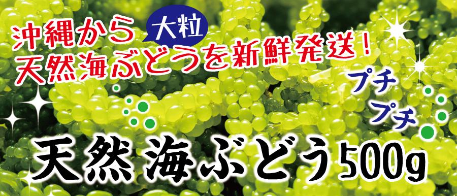 沖縄天然海ぶどう(500g)