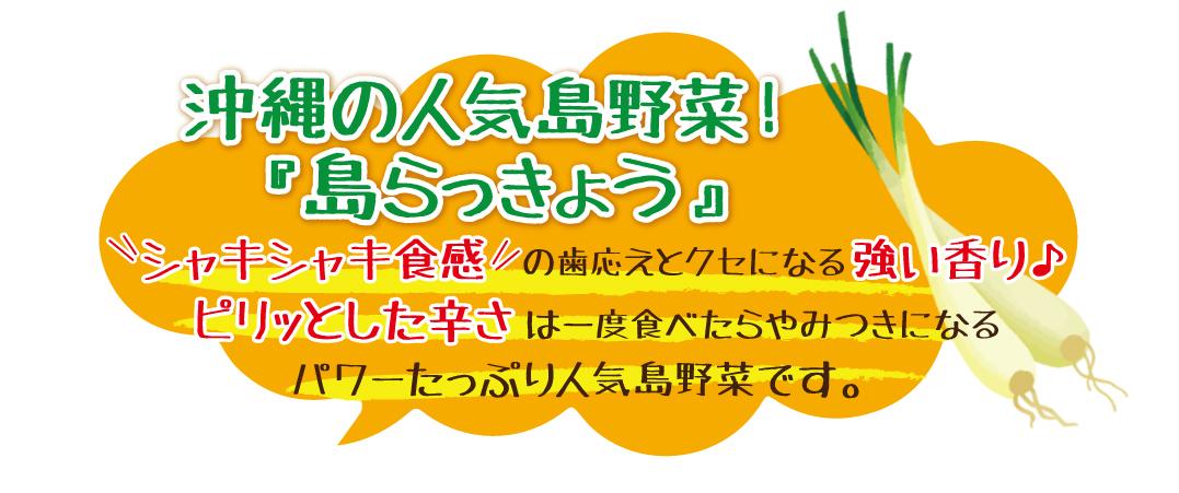 沖縄の人気島野菜!「島らっきょう」