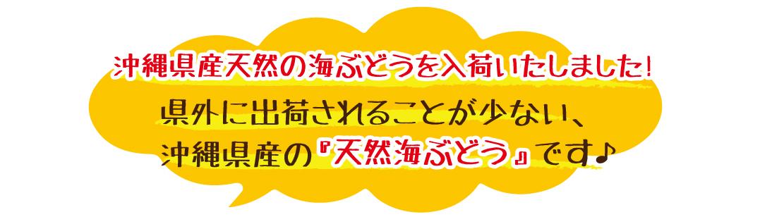 沖縄県産天然の海ぶどうを入荷いたしました! 県外に出荷されることが少ない、沖縄県産の天然海ぶどうです。