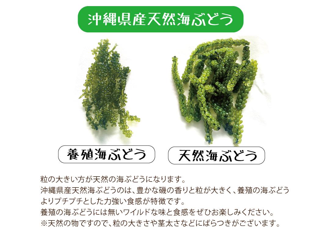 沖縄県産天然海ぶどうの特徴豊かな磯の香りと粒が大きく、養殖の海ぶどうより、プチプチとした力強い食感が特徴です。